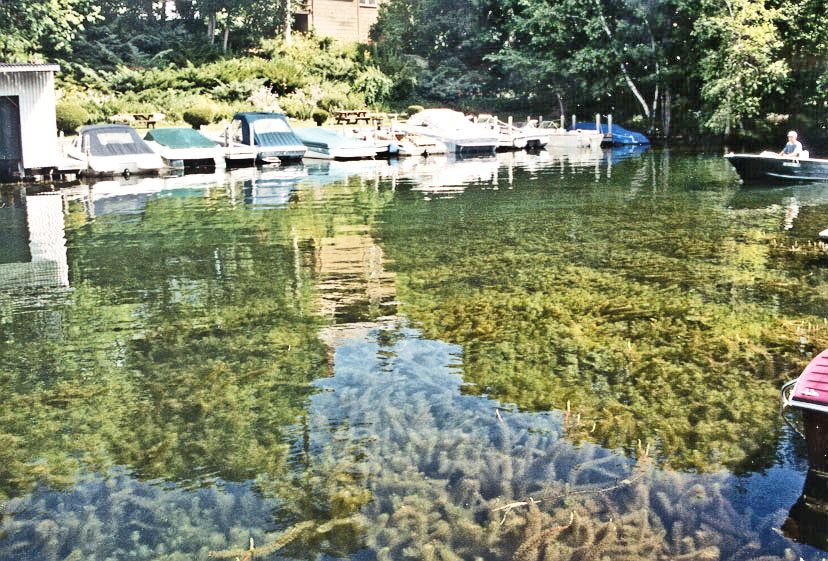 Milfoil-choked cove on Squam Lake
