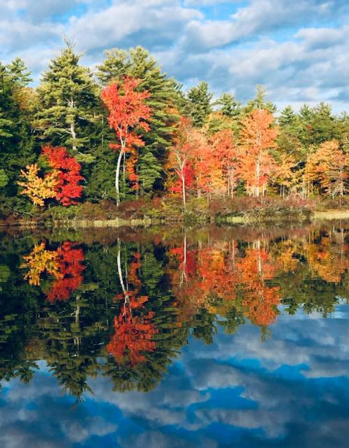 fall reflections 4